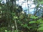 Batu marmer di Pulau Sempu